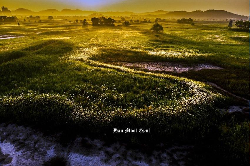 소래습지생태공원의 에스라인 띠꽃