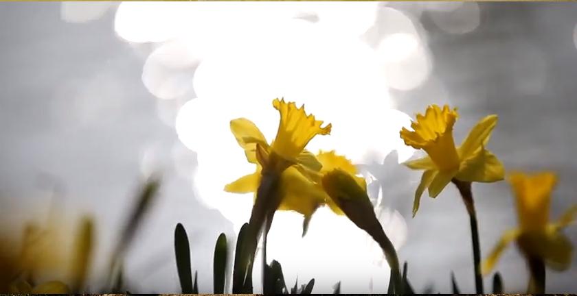 꽃잎편지 봄이 오는 소리 – 시인 안춘예