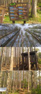 인천논현동-늘솔길공원-숲속