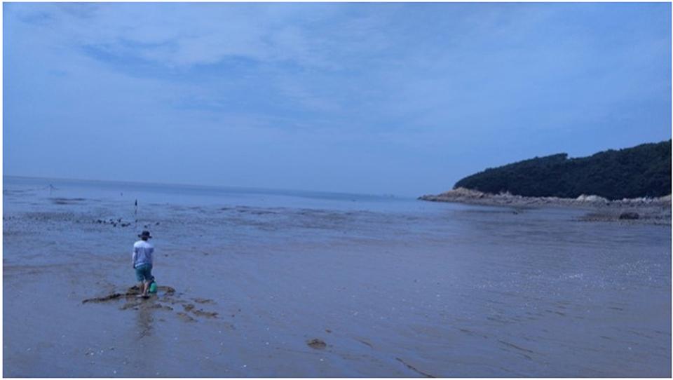 대이작도-해변-물빠진-모습