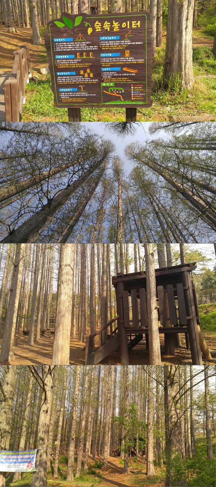 늘솔길공원-숲속