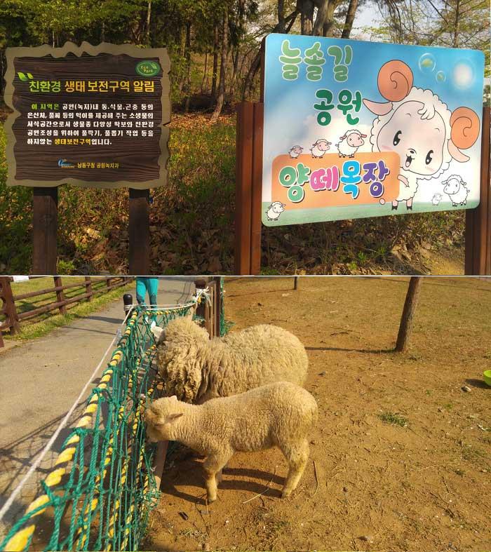 늘솔길공원-양떼