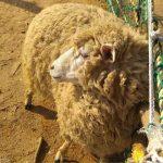 인천논현동 주말나들이 늘솔길공원 양떼목장