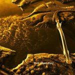 하늘에서 본 가을속 시흥갯골 미생의 다리