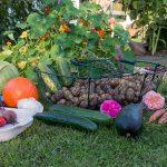 겨울철 건강 면역력 높이는 5가지 식품 추천
