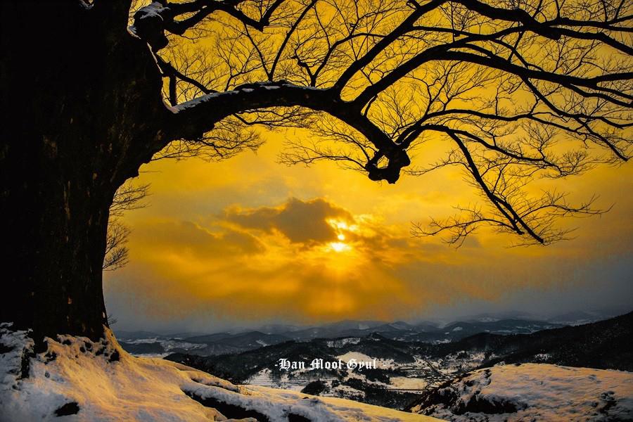 충남 부여군 임천면 성흥산성 사랑나무