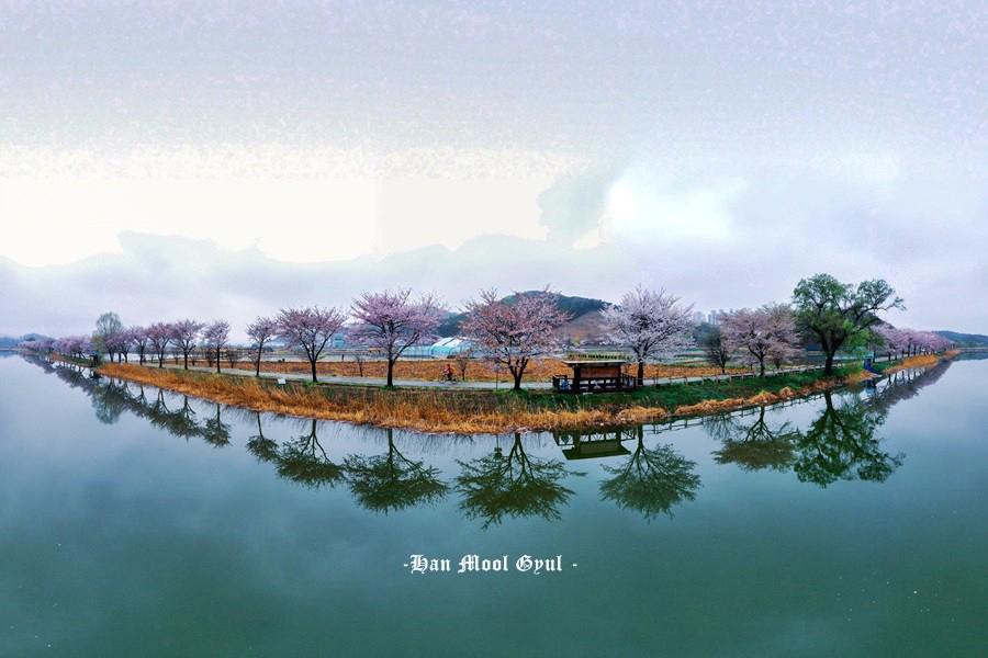 시흥 보통천의 봄