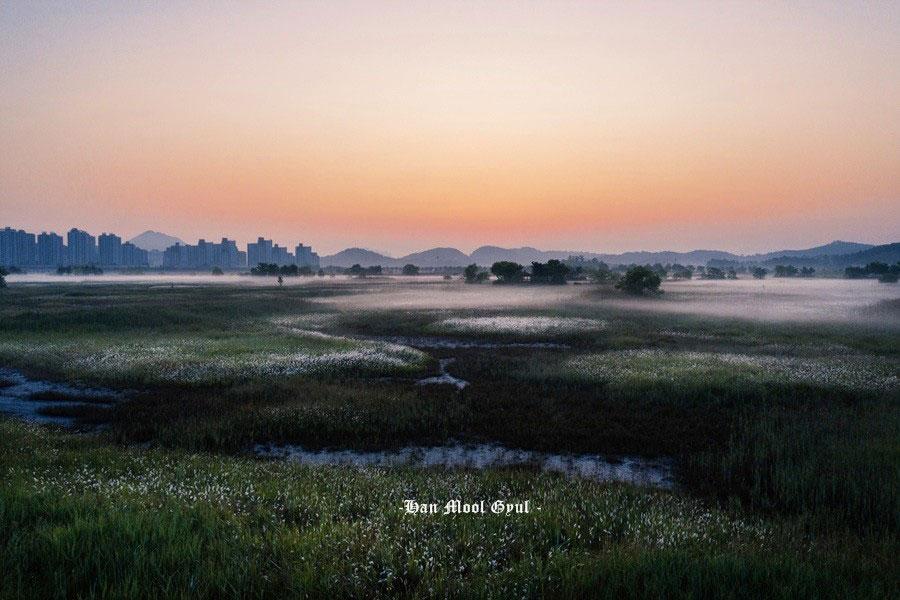 인천논현동 소래습지 생태공원 2019.06.13 띠